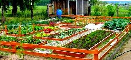 как правильно распланировать участок под огород